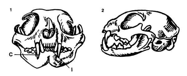 Если зубы не прорезаются на нижней челюсти