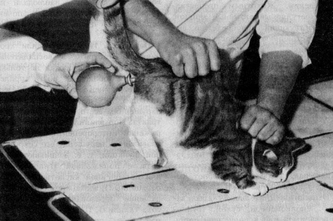 Клизма для кошек в домашних условиях