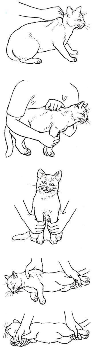 Случаются как держать котенка? перемудрили. Как
