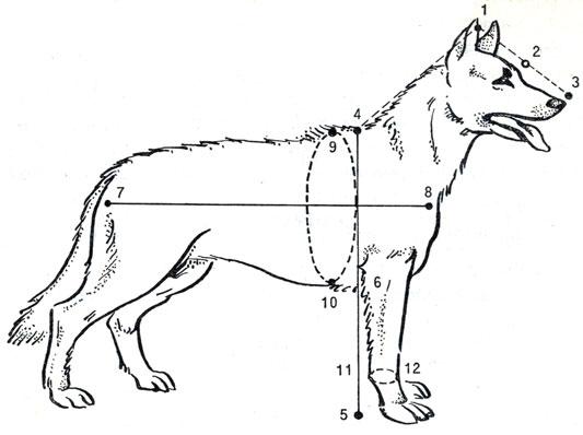 Схема основных промеров